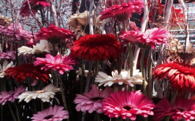 cropped-dmcflora-10.jpg